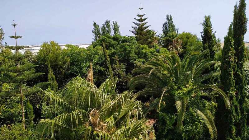 verano-jardin-botanico-la-almunya-del-sur-31