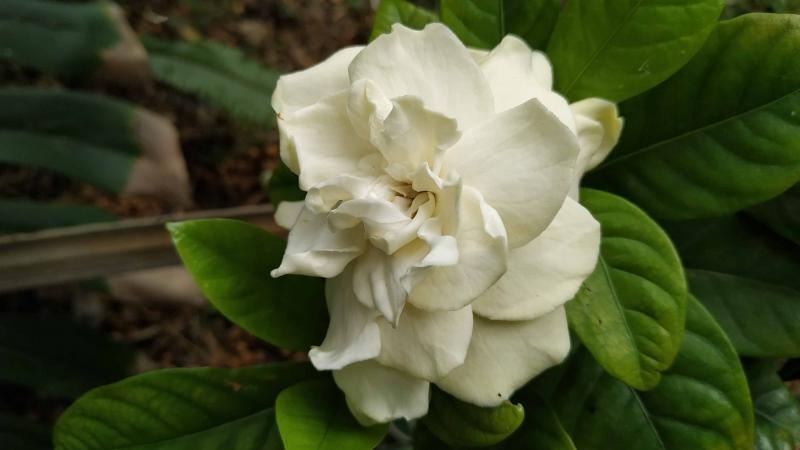 verano-jardin-botanico-la-almunya-del-sur-35