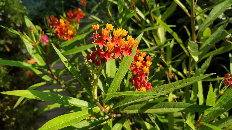 verano-jardin-botanico-la-almunya-del-sur-36