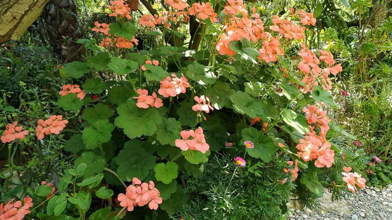 verano-jardin-botanico-la-almunya-del-sur-4