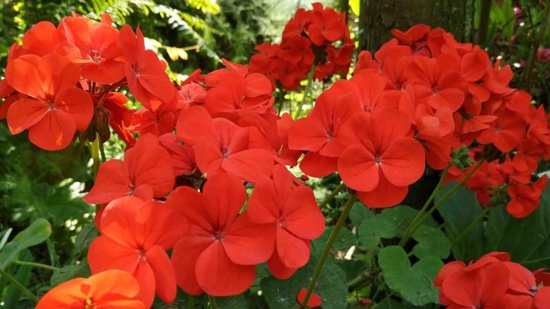 verano-jardin-botanico-la-almunya-del-sur-5