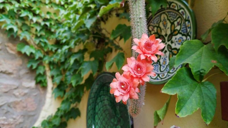 verano-jardin-botanico-la-almunya-del-sur-65