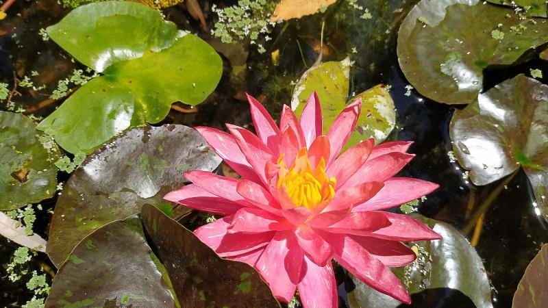 verano-jardin-botanico-la-almunya-del-sur-7