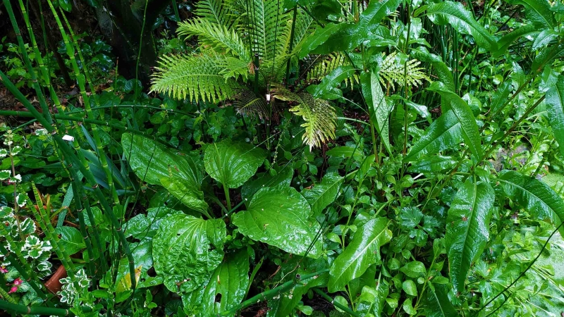 Primavera Jardin Botanico La Almunya del Sur 2